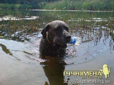 собака Бара, блог Інни Шевченко