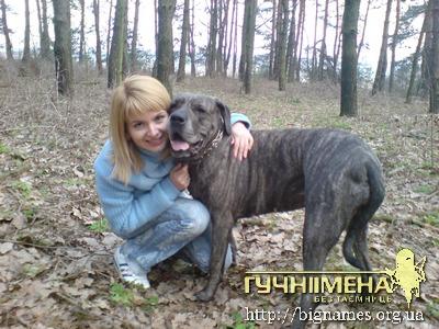 Інна Шевченко і собака Бара, блог Інни Шевченко